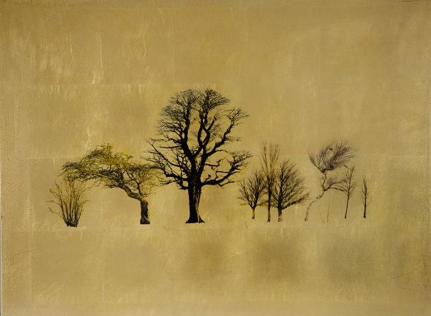 Dormientas Saltus - Robert Hind