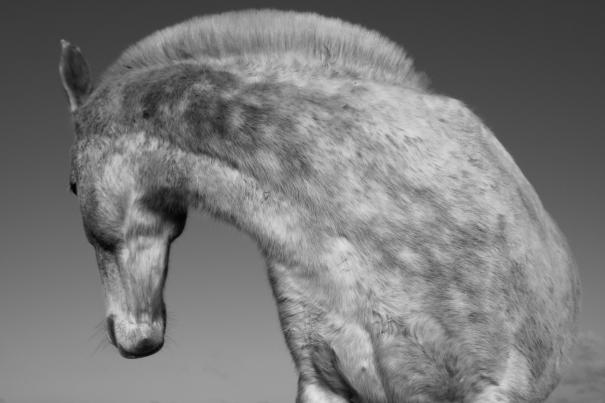 Horse Profile 1 by Iain Maitland