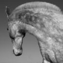 Horse Profile 1