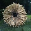 Artist uses thousands of pieces of scrap wood to create overwhelming sculptures