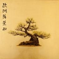 Bonsai - Larix Decidua