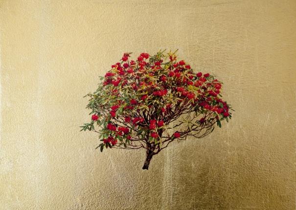 Rob Hind - Rhododendron Pontica