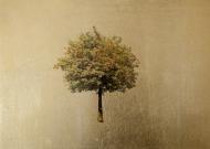 Sorbus (Large)