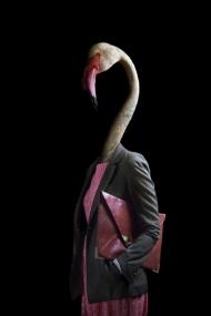 Flamingo – Portrait Number Forty
