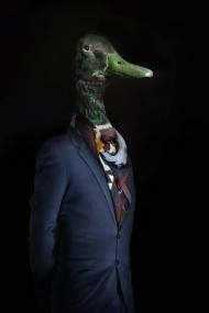 Duck – Portrait Number Eleven