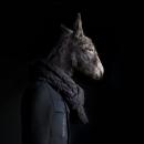 Donkey – Portrait Number Thirty Nine