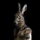 Rabbit – Portrait Number Twenty Nine