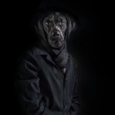 Labrador – Portrait Number One