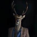 Roe Deer – Portrait Number Three