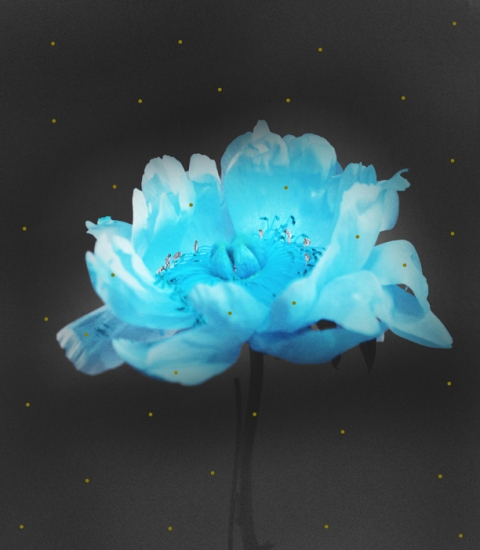 Pollinators by juliana manara buy affordable art online for Buy affordable art online