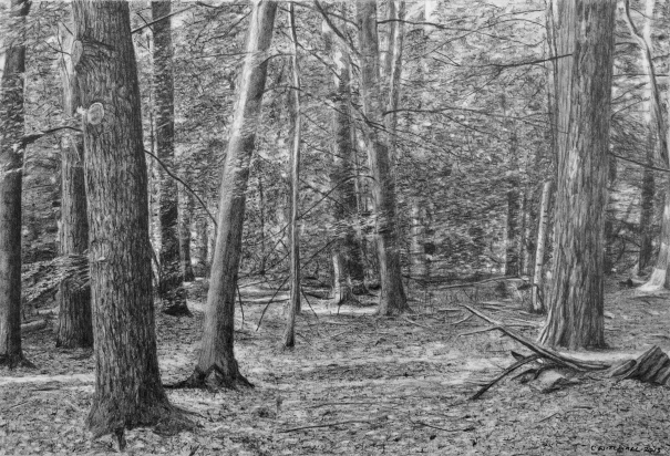 Forest Drawing Ii By Christopher Witchall Buy Affordable