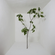 Tree in studio