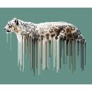 Snow Leopard - Sage