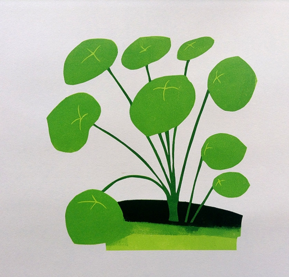 Pilea Peperomiodes by Kerry Day