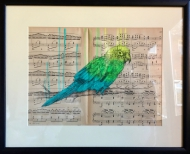 Parrot on Music Score