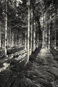 Irish Wood