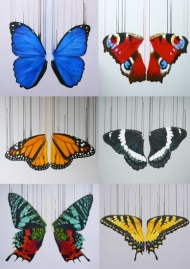 Set of 6 Butterfly Wing Giclees by Louise McNaught