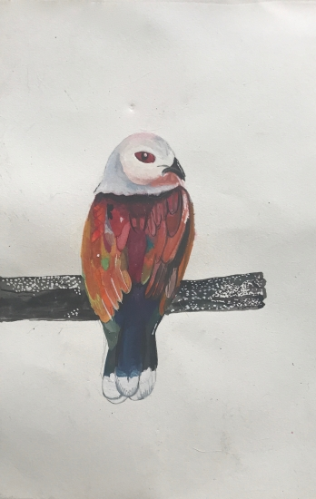 Purple tailed imperial pigeon by Daisy Clarke