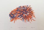Orange-Blue-Flower