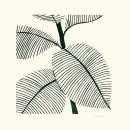 Verde Leaves II