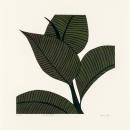 Rubber Plant I