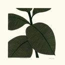 Rubber Plant II