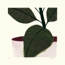 Rubber Plant III