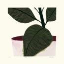 Rubber Plant III