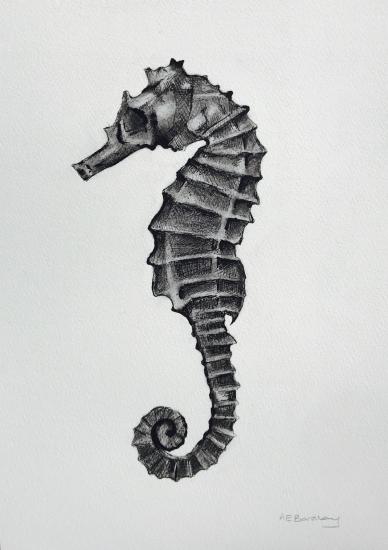 Seahorse 2 by Antonia Barclay