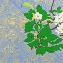 Apple Blossom Graphic Impression 4