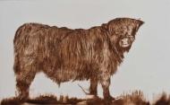 Highland Cow II