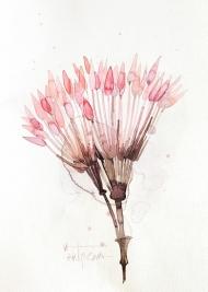 Herbal | Pink
