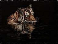 Chai & Paan Tiger: Air