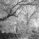 Woods near Moulin Sansonneche