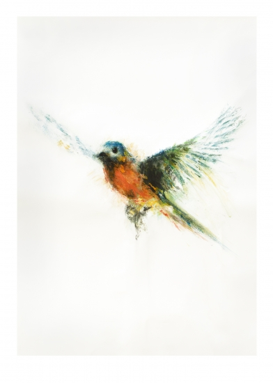 Bluebird by Marion McConaghie