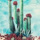 Cactus Pool