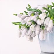 L'eleganza dei bucaneve - The elegance of snowdrops