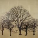 Arboretum Winter III