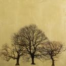 Arboretum Winter IV