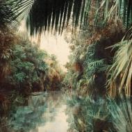 Backwaters Jungle
