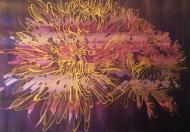 Dahlia Purple Gold