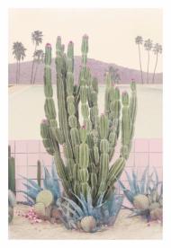 Cactus Springs