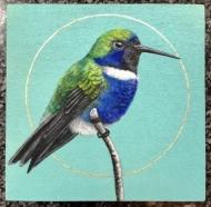Hyacinth Visobearer Hummingbird
