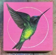 Dusky Starfrontlet Hummingbird