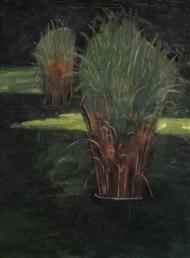 Petit étang aux Tuileries