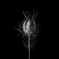 Fleur Noir IX