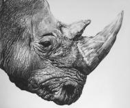 Northern White Rhino Print