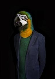 Parrot - Portrait Number Ninety Seven