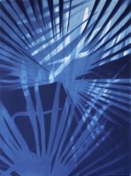 Chusan palm blue XVI
