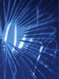 Chusan palm blue XVIII